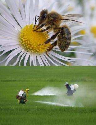 """Profecía de Einstein: """"La desaparición de la abeja entrañará la del polen, las flores, la miel... el hombre"""" 1316427487"""