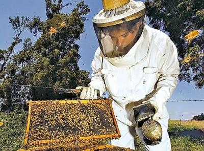 """Profecía de Einstein: """"La desaparición de la abeja entrañará la del polen, las flores, la miel... el hombre"""" 1316427562"""