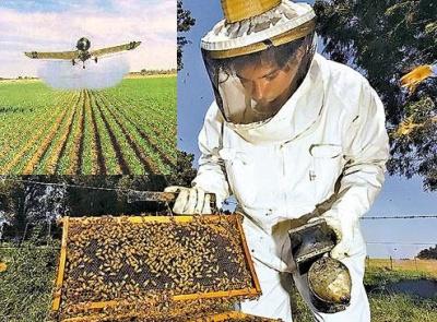 """Profecía de Einstein: """"La desaparición de la abeja entrañará la del polen, las flores, la miel... el hombre"""" 1316427662"""